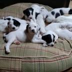 pups 4